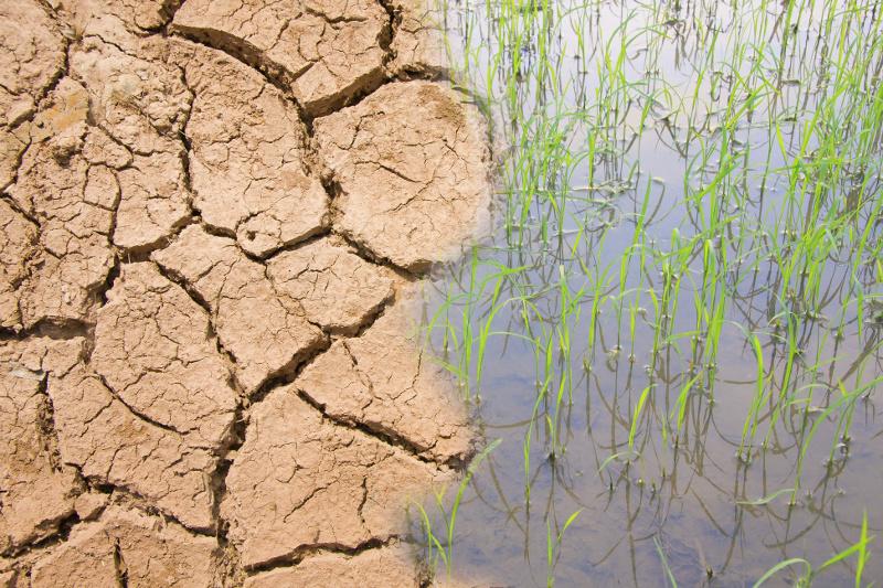 Village level soil moisture mapping using satellite data for Soil moisture